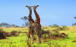 3 Days Murchison Falls National Park Trip
