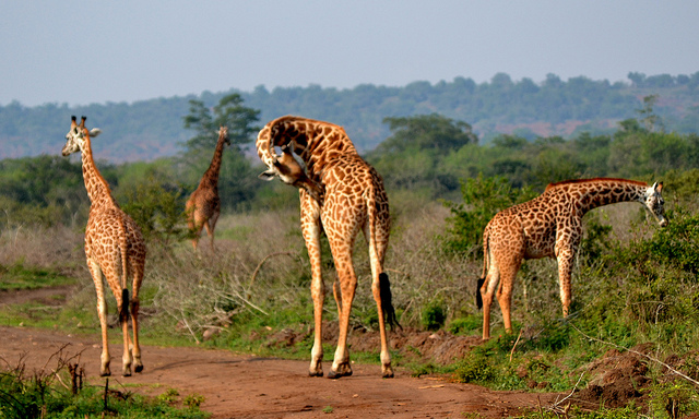 5 Days Rwanda Gorilla Trek & Wildlife Tour