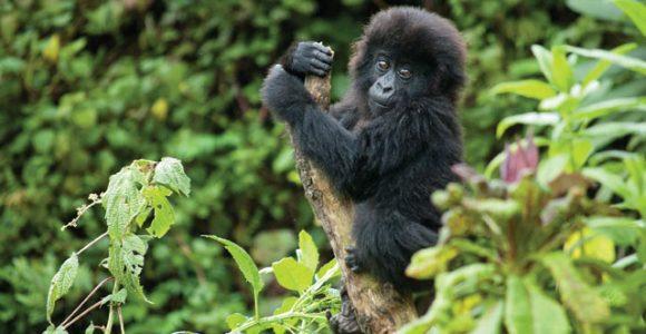 5 Days Rwanda Tour