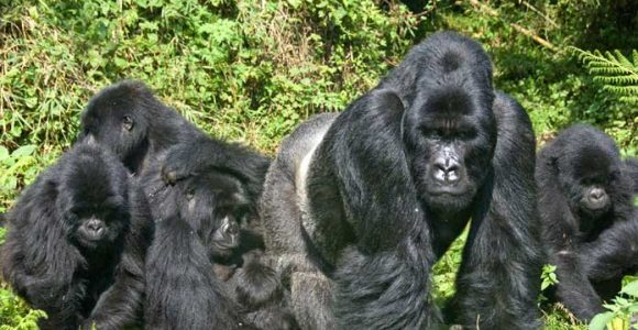 10 Days Uganda Rwanda Safari