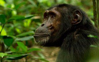 3 Days Nyungwe Chimpanzee Tracking