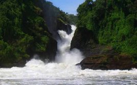 7 Days Jinja Tour, Gorillas & Murchison falls Safari