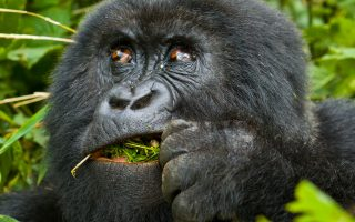 4 Days Rwanda Gorilla Trekking