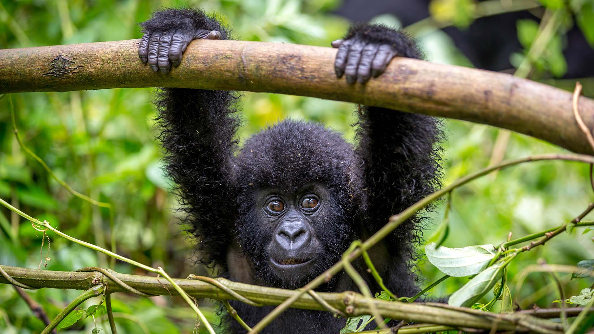 Gorilla trekking in Bwindi & packing list