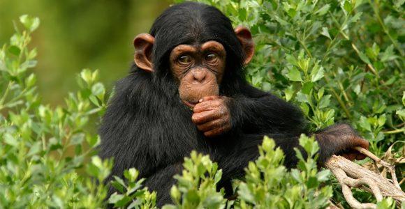 6 Days Uganda Gorillas & Murchison falls Safari