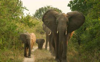 4 Days Lake Mburo & Queen Elizabeth Safari