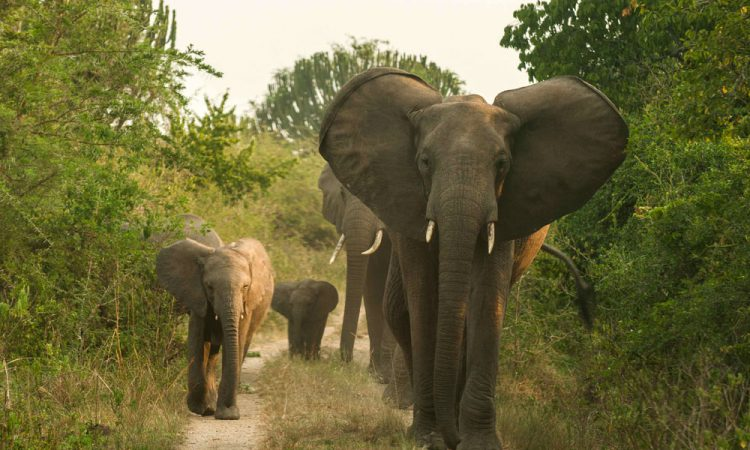 4 Days Lake Mburo & Queen Elizabeth Safari
