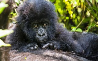 8 Days Gorilla and African Big 5 Adventure