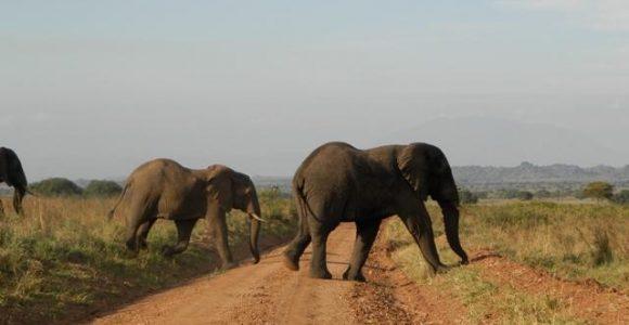 5 Days Gorilla & Wildlife Safari Uganda