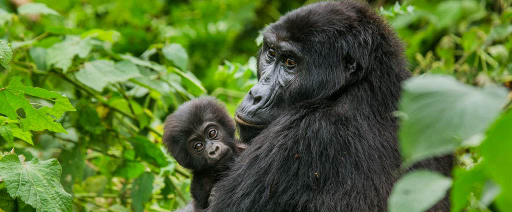 5 Days Virunga Gorillas & Nyiragongo Hike