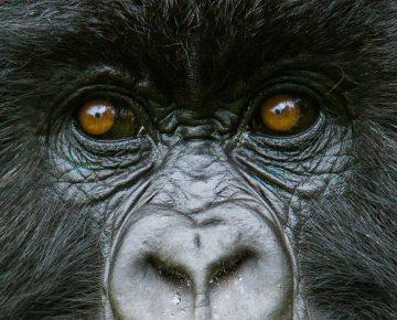 discounted rwanda gorilla permits