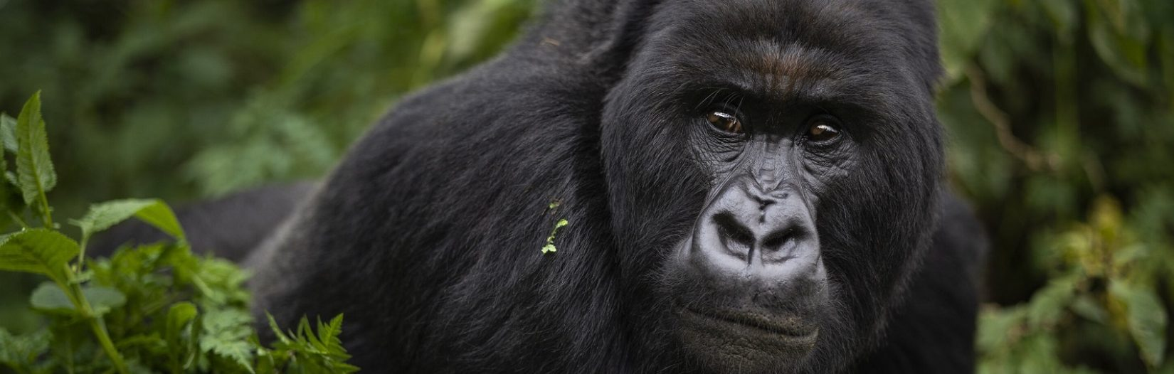 Uganda gorilla trekking coat breakdown