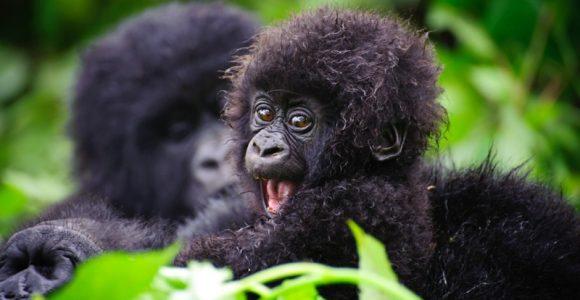 3 Days Uganda Gorilla Trekking Safari