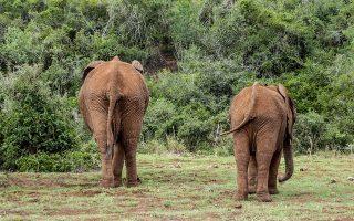 12 Days East Africa Safari