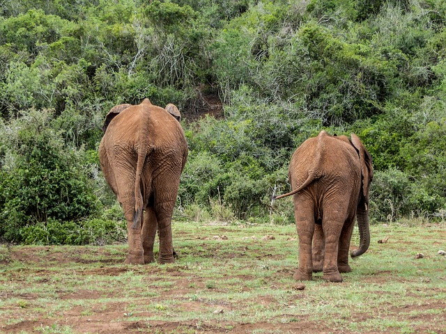 12 Days East Africa Safari