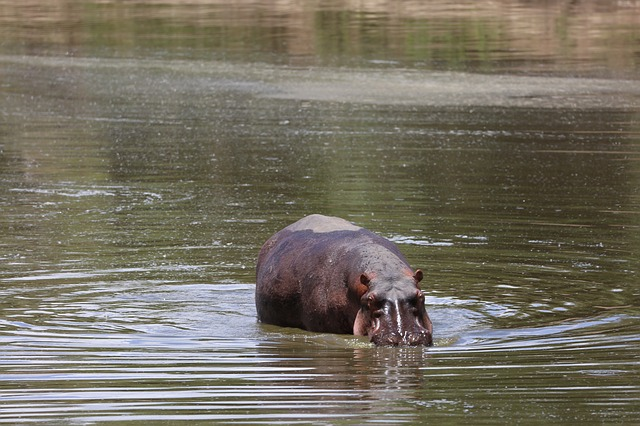 18 Days East African Safari
