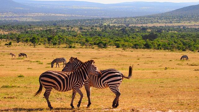 14 Days Uganda Safari