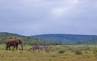 11 Days Classic Uganda Safari