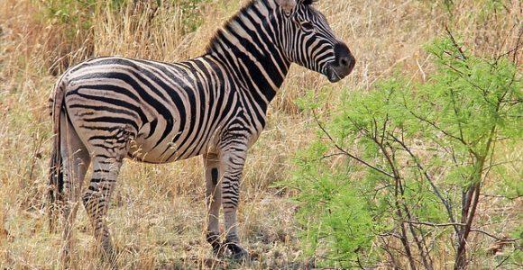 17 Days Uganda Safari