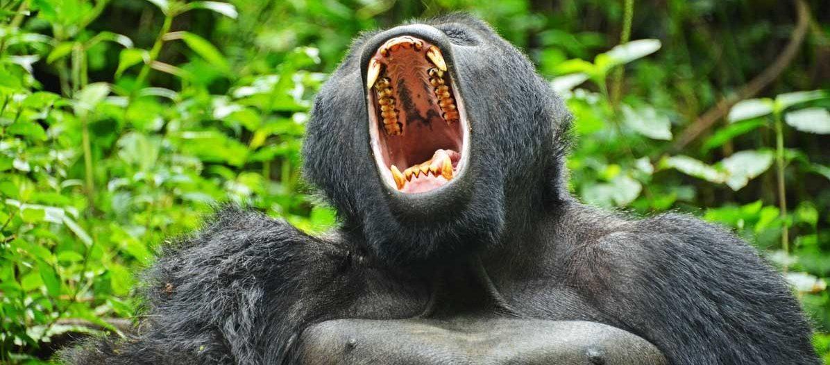 10 days uganda safari gorilla